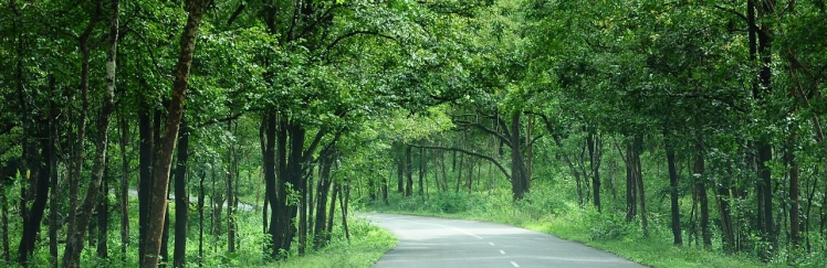 NH-212_through_Bandhipur_forest_roads_in_Kerala_India
